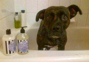 dog standing in bathtub surrounded by products in bottles